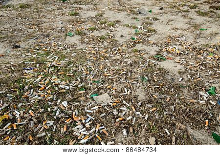 Cigarette Butts On The Lawn Of The City In The Spring