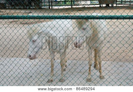 White Horse In Cage
