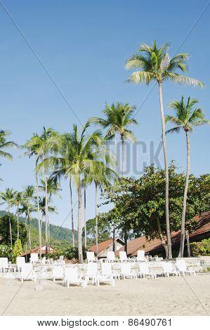 Tropical landscape with palm. Koh Samui, Thailand