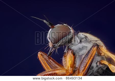 Extreme sharp and detailed macro portrait of small fly head taken with microscope objective