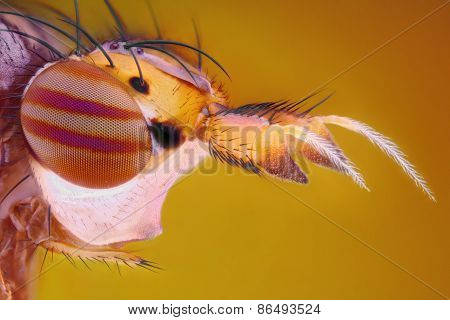 Extreme sharp and detailed study of fly head taken with microscope objective stacked from many shots