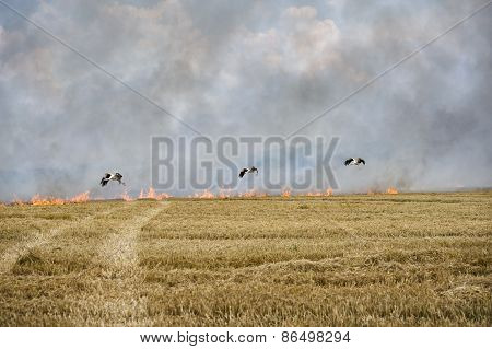 Storks and fire