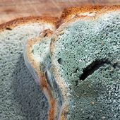 stock photo of spores  - Mold growing rapidly on moldy bread in green and white spores