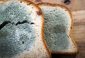 pic of spores  - Mould growing rapidly on mouldy bread in green and white spores - JPG