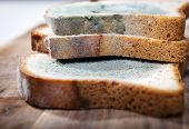 stock photo of spores  - Mold growing rapidly on moldy bread in green and white spores - JPG