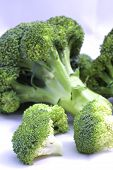 stock photo of cruciferous  - Fresh broccoli on white with soft shadow - JPG