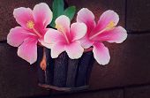 stock photo of hibiscus flower  - still life flowers Pink Hibiscus flowers in a basket and wall surface - JPG
