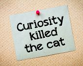 picture of kill  - Curiosity killed the cat Message - JPG
