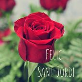 Постер, плакат: closeup of a red rose and the text Felic Sant Jordi Happy Saint Georges Day written in catalan wh