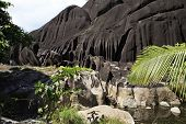 stock photo of enormous  - Enormous black granite rocks in the thickets of tropical vegetation - JPG
