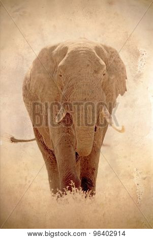 Old African Elephant In Vintage Sepia Tone