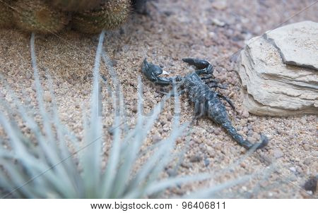 Scorpion On Sand