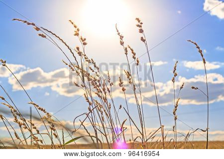 The Stems Of Grass