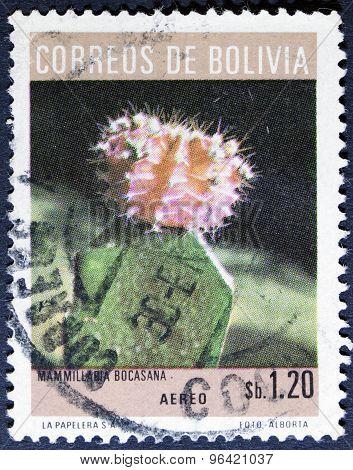 Cactus flower isolated on black