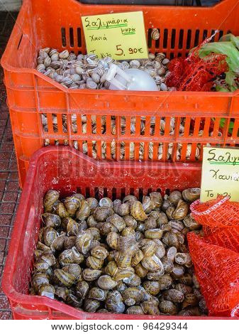 Retail Sale Of Snails In Red Crates On A Stall Of Piraeus Port