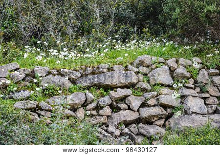 Dry Stone Wall Covered With A Bed Of White Flowers And Grass