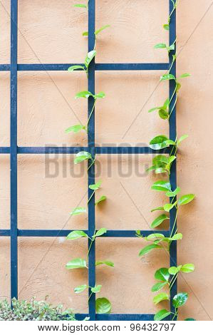 An Iron Fence On Top With An Ivy Covered