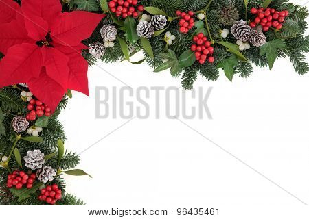 Poinsettia flower background border with holly, ivy, mistletoe and blue spruce fir over white.