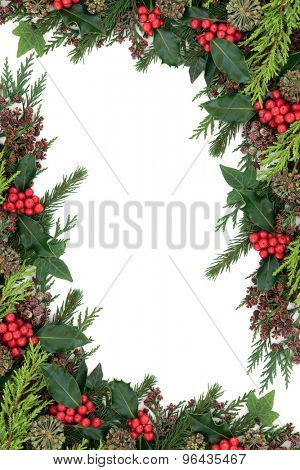 Winter and christmas background border with holly, ivy, fir and cedar cypress over white.