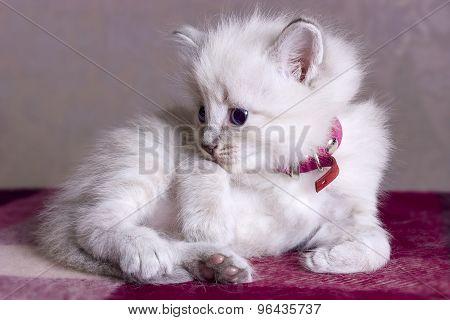 Little kitten developing world