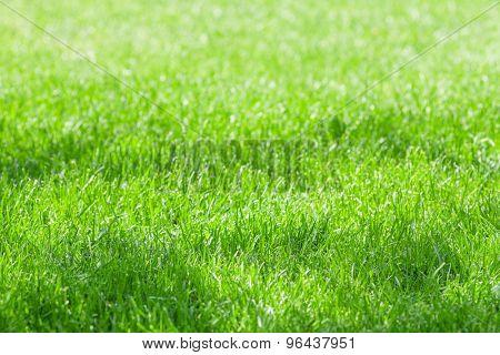 Sunny green grass field meadow