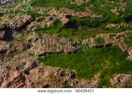 Seashore rock and algae