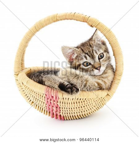 Isolated Kitten In Basket