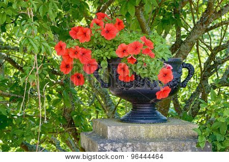 Iron Flower Pot And Red Flowers