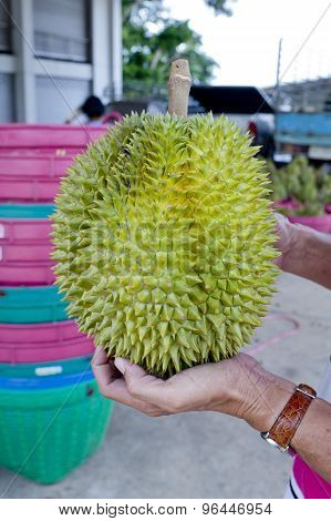 Put Durian On Left Hand
