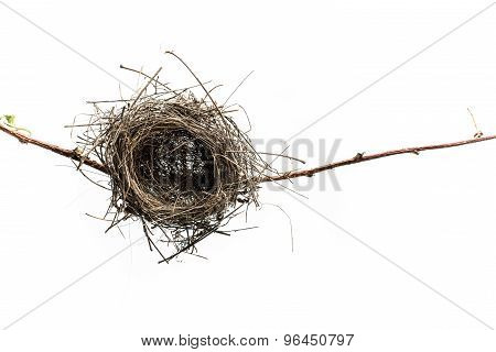 Empty bird nest.