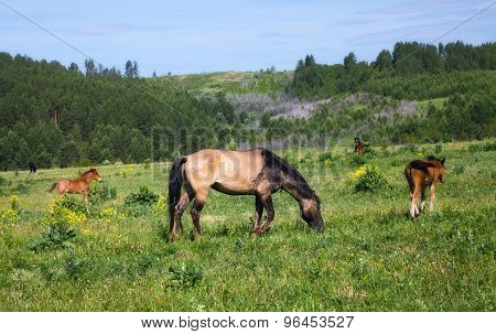 Horses and foals graze on green grass with hills in the background
