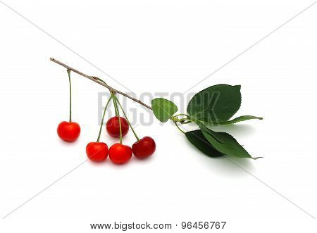 A Sprig Of Cherry With Berries On A White Background
