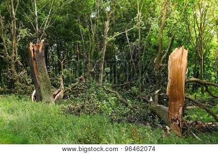 Damaged tree.