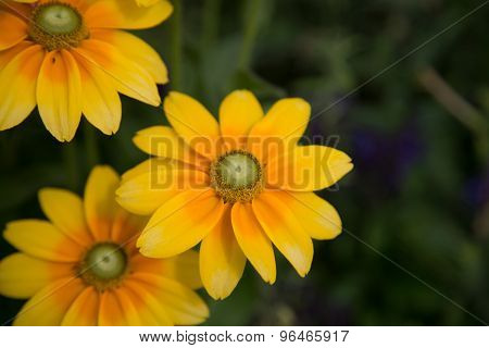Lovely Yellow Flower - Stock Image
