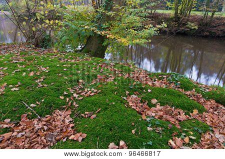 Forest Ground