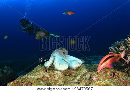 Woman Scuba diver and octopus