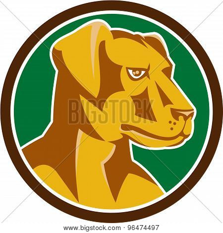 Labrador Golden Retriever Dog Head Circle Retro