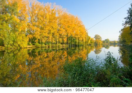 Yellow forest on river coast at autumn