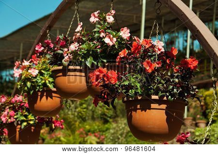 Flowerpots With Impatiens Flowers
