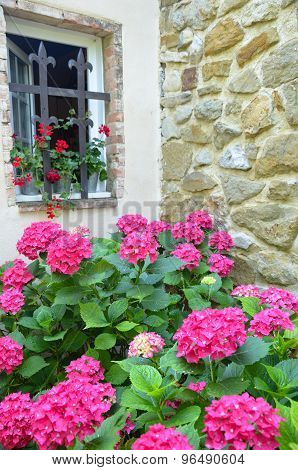 Massif Of Pink Hydrangea On Stone Wall