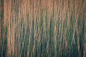 foto of dry grass  - Close - JPG