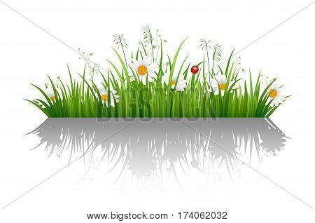 Green Grass Border With Isolated And Chamomile Flower On White Background Vector Illustration