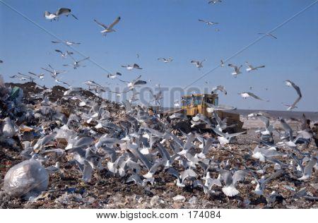 City Dump 28