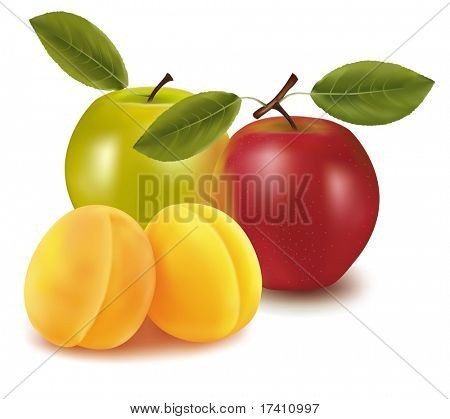 Photo-realistic vector illustration. Two apples and two apricots.