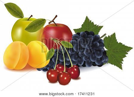 Photo-realistic vector illustration. Two apples, two apricots, cherries and grapes