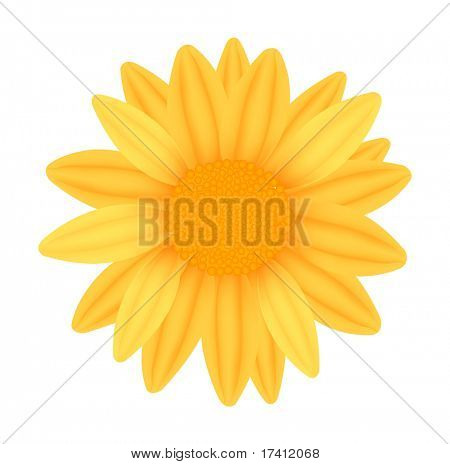 Beautiful yellow sunflower. Photo-realistic vector