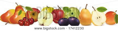 Fruit design border isolated on white. Vector.