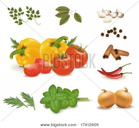The colorful group of vegetables and spice collection. Photo-realistic vector.