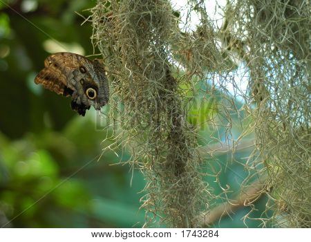 Butterfly244