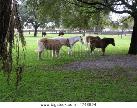 Pony In Ocala